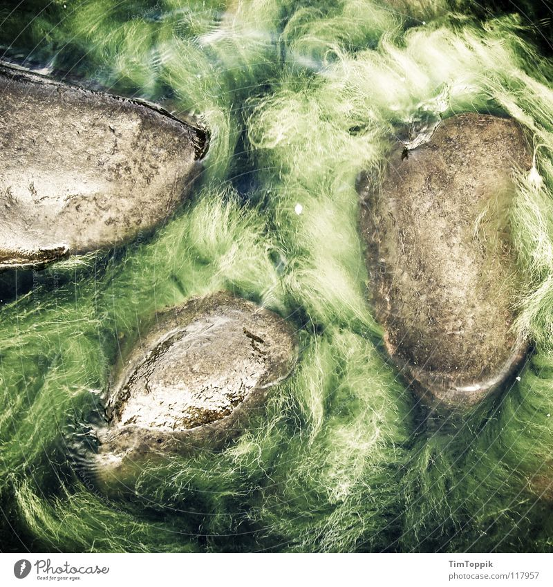Eesti Algi Algen See Meer grün nass Atlantik Pazifik Indischer Ozean Verhext mystisch Urwald Amazonas Sumpf geheimnisvoll Stein Mineralien Strand Küste Wasser