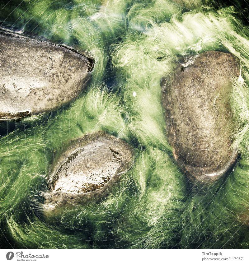 Eesti Algi Natur Wasser grün Meer Strand Küste Stein See nass geheimnisvoll Nordsee Ostsee Urwald mystisch Brasilien Algen