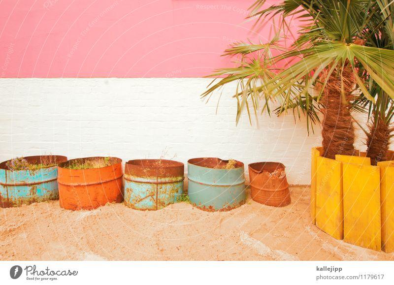 beach weiß Freude gelb Stil Lifestyle rosa Fassade orange Freizeit & Hobby trendy türkis exotisch Palme Sandstrand Topf Grünpflanze
