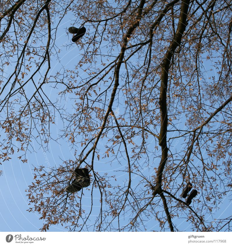 stiefelbaum Baum Schuhe Stiefel baumeln hängen Blatt schwarz Himmel Bekleidung Ast mit beiden beinen am boden on the ground feet on the ground werfen blau