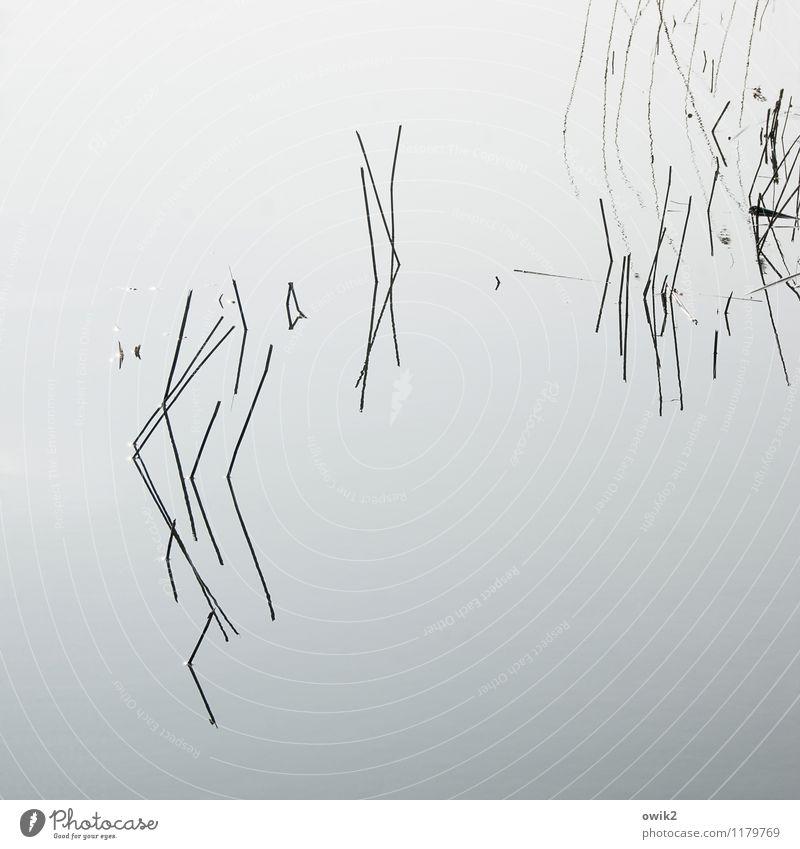 Windstill Pflanze Wasserpflanze See dünn authentisch einfach nah Wasseroberfläche Halm ruhig Linie minimalistisch wenige karg Rätsel graphisch Konzentration