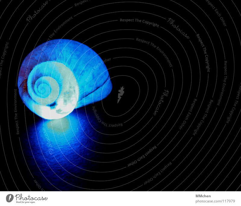Nachmieter gesucht Natur blau schön Tier dunkel Beleuchtung leuchten Kreis Spitze weich Schutz Umzug (Wohnungswechsel) Spirale Schnecke hart Charakter