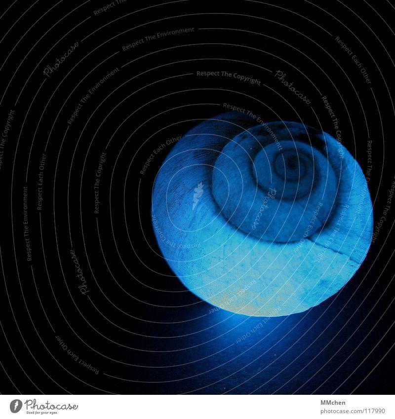 Leuchtschnecke Natur blau schön Tier dunkel Beleuchtung leuchten Kreis Spitze weich Schutz Umzug (Wohnungswechsel) Spirale Schnecke hart Charakter