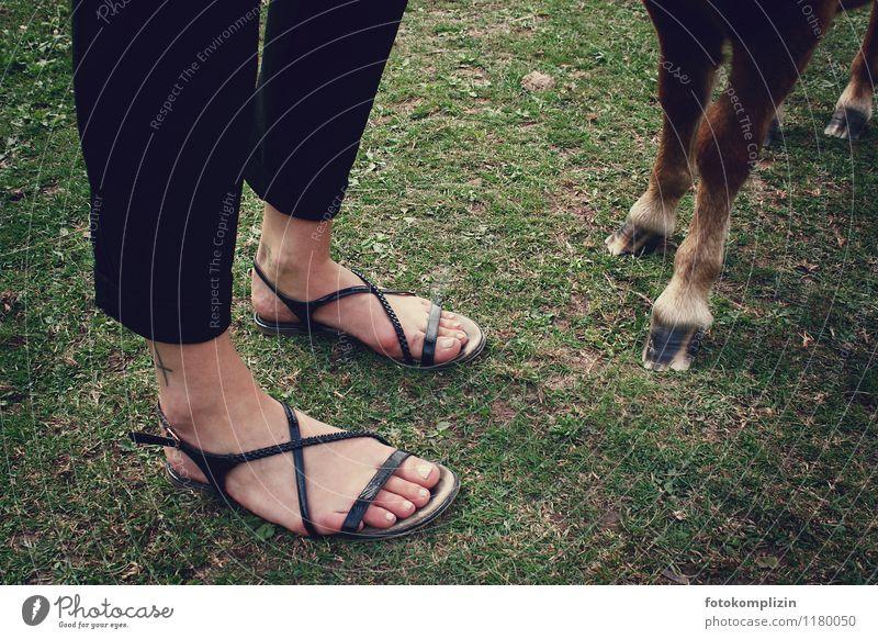zehen_look Wiese Fuß Zusammensein Freundschaft stehen Pferd Fürsorge Zehen Ponys standhaft Tierliebe Reiten Einigkeit nebeneinander