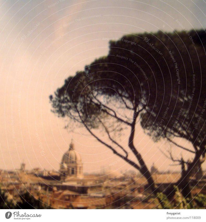 Rom 2003 (Back to the Quadrat) Baum Stadt Ferien & Urlaub & Reisen Wärme Kunst Europa Kultur Italien Physik heiß Amerika Vergangenheit historisch Dom Rom Kuppeldach