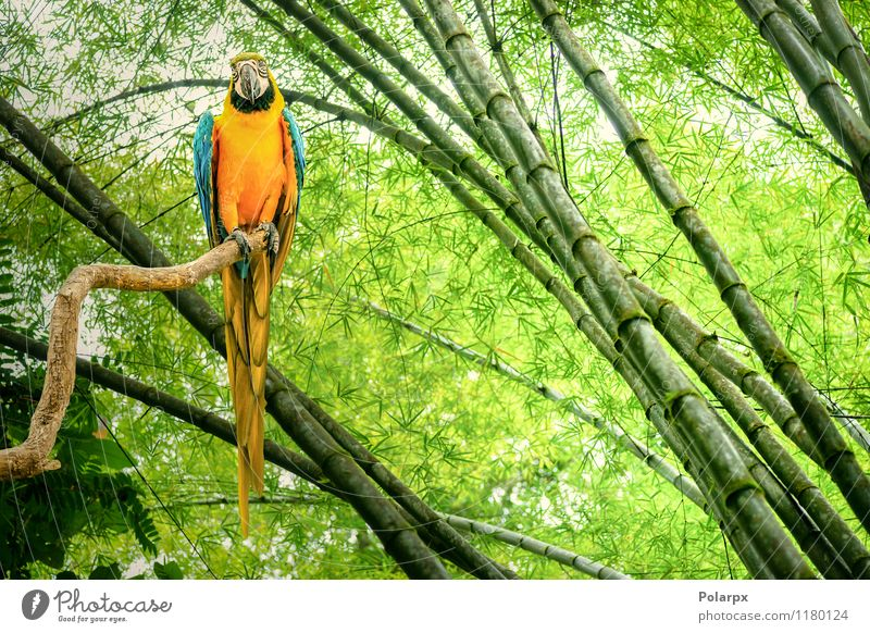 Papagei in einem Regenwald Natur blau schön grün Farbe Tier gelb Leben natürlich Vogel hell wild Feder niedlich Haustier exotisch