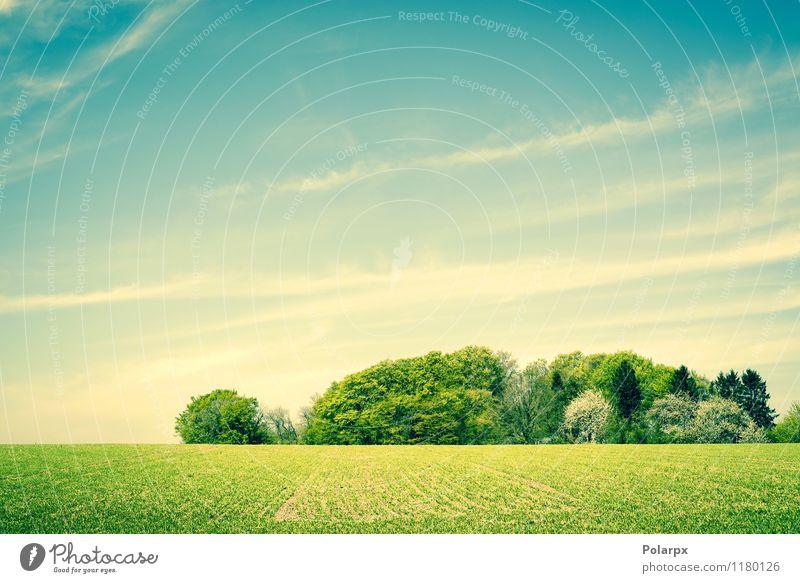 Grüne Landschaft Kräuter & Gewürze schön Sommer Sonne Umwelt Natur Pflanze Himmel Wolken Horizont Frühling Wetter Baum Gras Wiese Wald Wachstum hell natürlich