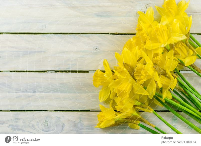 Narzissen auf einem Tisch Design schön Garten Dekoration & Verzierung Ostern Gartenarbeit Natur Pflanze Frühling Blume Blatt Blüte Blumenstrauß Wachstum frisch