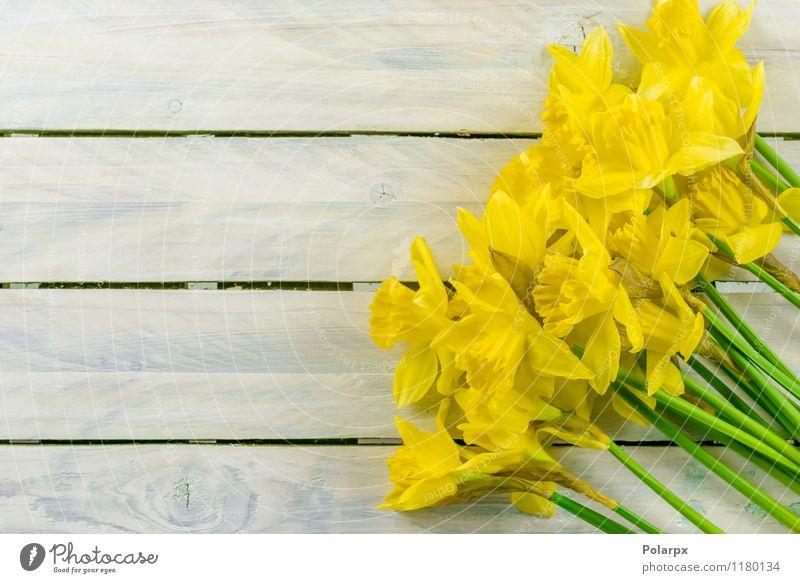 Narzissen auf einem Tisch Natur Pflanze schön grün weiß Blume Blatt gelb Frühling Blüte natürlich Garten Design Dekoration & Verzierung Wachstum frisch