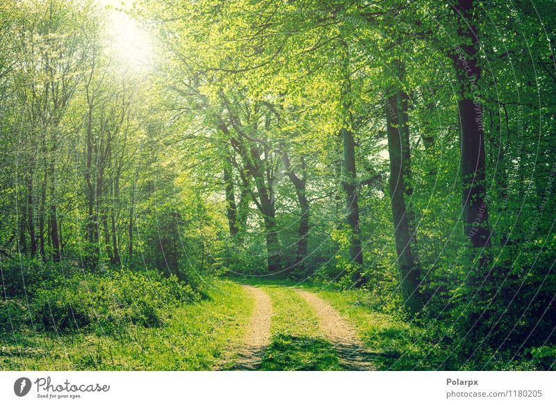 Wald im Frühling schön Sommer Sonne Umwelt Natur Landschaft Pflanze Herbst Baum Blatt Park Straße Wege & Pfade hell natürlich grün Farbe Buchsbaum Jahreszeiten