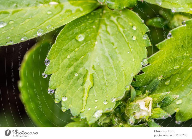 Blätter im Regen Gesundheit Gesundheitswesen Wellness Leben harmonisch Wohlgefühl Zufriedenheit Erholung ruhig Meditation Umwelt Natur Pflanze Tier Wasser