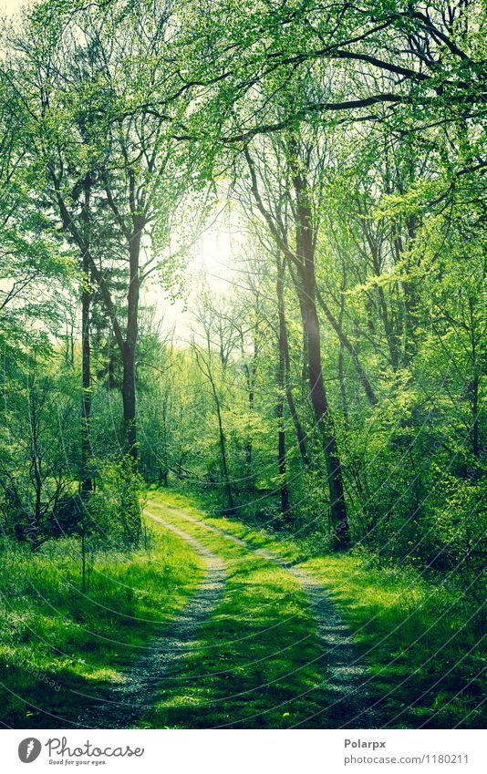 Grüner Wald Natur Pflanze schön grün Farbe Sommer Sonne Baum Blatt Landschaft Umwelt Straße Frühling Herbst natürlich