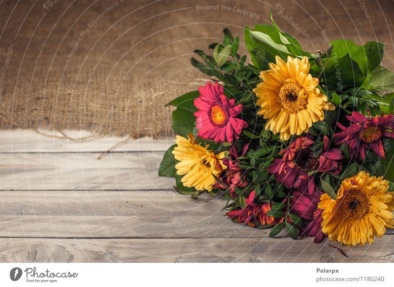 Blumengesteck auf einer Tabelle Design schön Sommer Garten Dekoration & Verzierung Tisch Feste & Feiern Ostern Hochzeit Mutter Erwachsene Natur Frühling Blatt