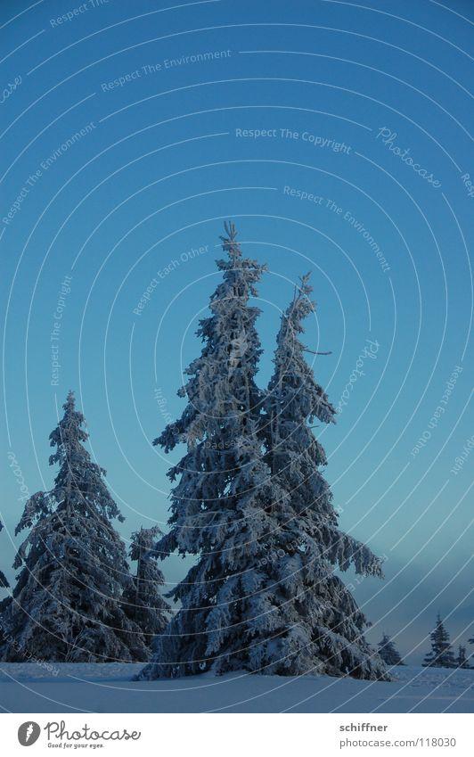 Ä Tännchen II Himmel Winter Wolken Ferne kalt Schnee Berge u. Gebirge Freiheit Eis Nebel Niveau Unendlichkeit Idylle Tanne Gipfel Schneelandschaft