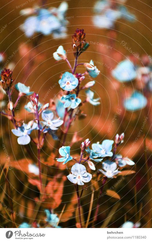 blümchen am morgen... Natur blau Pflanze schön Sommer Blume Blatt Frühling Blüte Herbst Wiese Gras klein Garten braun Park