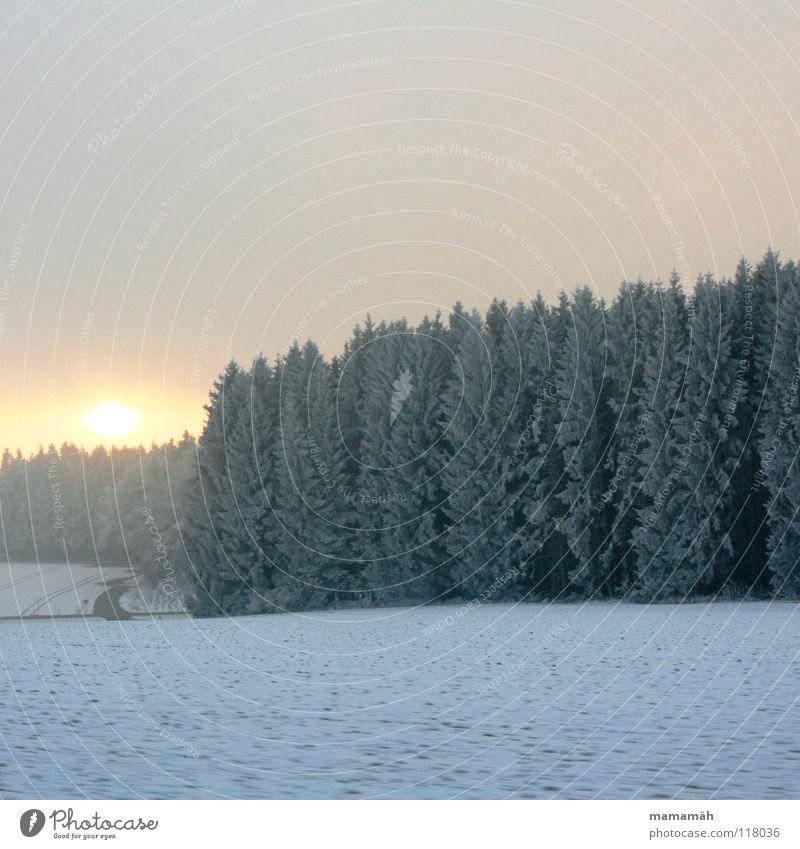 Winterstimmung weiß Baum Sonne Wolken Wald Schnee Wege & Pfade Feld schlechtes Wetter