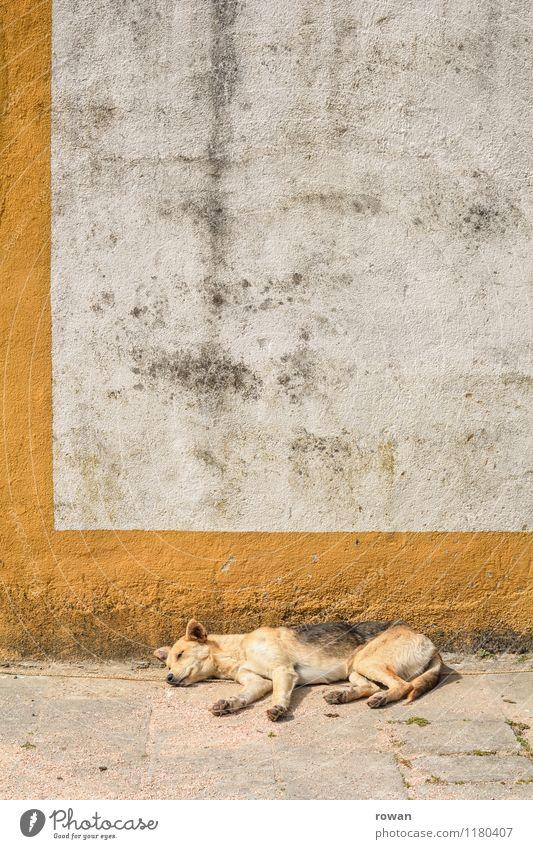 ausruhen Tier Hund 1 heiß schlafen ruhig Erholung Wärme Portugal Mauer Sommer Haustier Pause Sonnenbad Farbfoto Außenaufnahme Menschenleer Textfreiraum oben