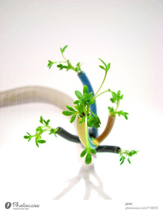 ökostrom grün Industrie Energiewirtschaft Elektrizität Technik & Technologie Kräuter & Gewürze Kabel Sauberkeit Natur Sportveranstaltung ökologisch Bioprodukte