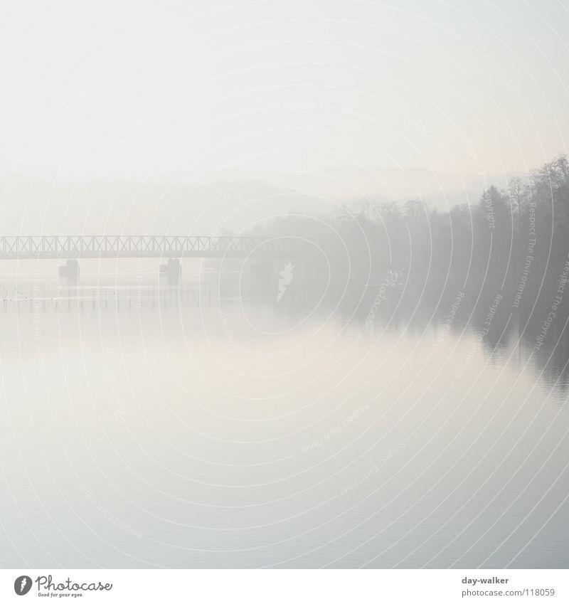 Silence See ruhig Erholung Nebel Morgen aufwachen Wald Baum Reflexion & Spiegelung Oberfläche Vogel Säule Fußgängerübergang Panorama (Aussicht) Wasser Küste