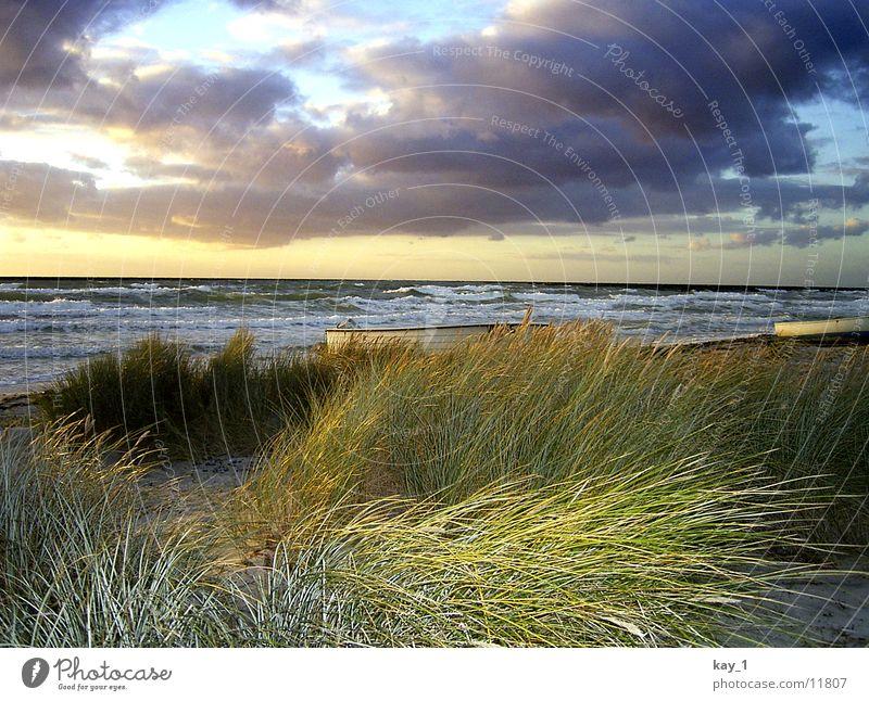 Herbst auf Hiddensee Meer Strand Wellen Sonnenuntergang Wasser Ostsee Abend sea evening autumn