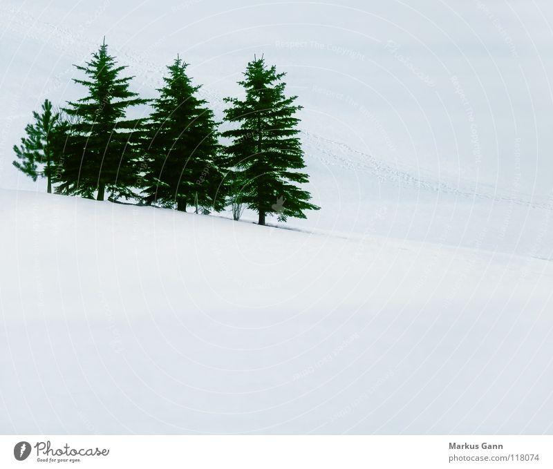 Tannen im Winter grün weiß Baum kalt Berge u. Gebirge Schnee Eis mehrere Nadelbaum Berghang