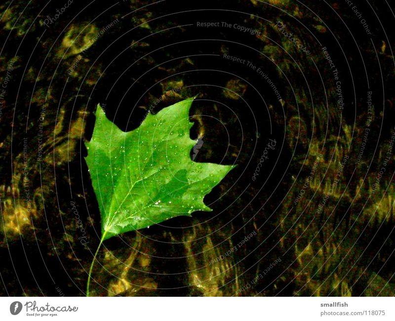 Blatt grün Licht nass Flüssigkeit Herbst Wasser ruhig Kontrast Im Wasser treiben