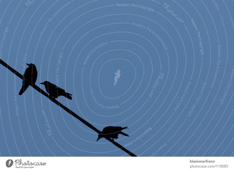 Fernsehen Vogel Krähe schwarz weiß grau dunkel trüb verwaschen Rabenvögel ruhig Unendlichkeit Leben Nacht Trauer Vergänglichkeit kommen gehen Fröhlichkeit