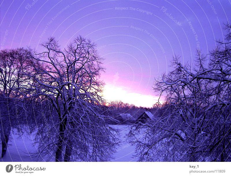 Nordic Winter Sonne Winter kalt Schnee Norden Niedersachsen