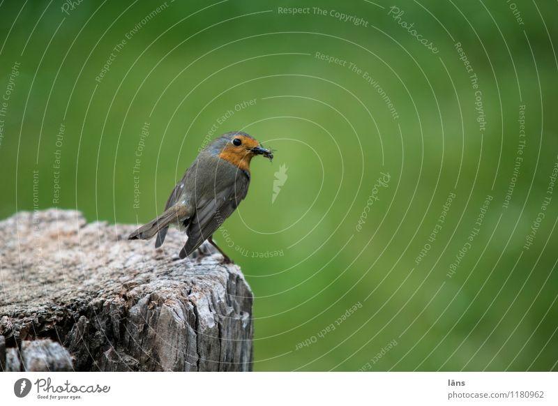 überblick Tier Wiese Garten Park Wildtier warten beobachten Rotkehlchen