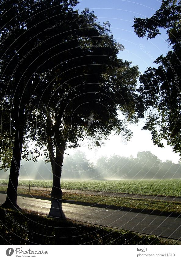 nebelsonne Baum Nebel