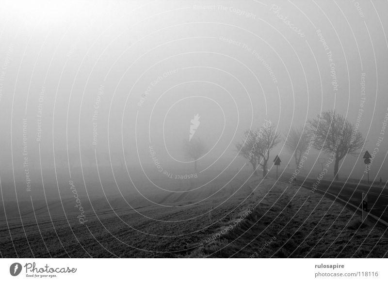 Winternebel weiß Baum Sonne ruhig Wolken Einsamkeit Ferne Straße Tod grau Feld Nebel Horizont Verkehr geschlossen