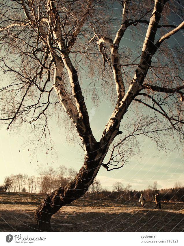 Abendspaziergang Winter kalt Einsamkeit ruhig Wiese gefroren Stimmung Sehnsucht Feld Erscheinung Baum bewegungslos Birke Horizont Spaziergang Luft atmen Gedanke