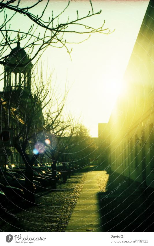 Nachmittagssonne Bürgersteig Haus Fassade historisch Baum Gegenlicht Sonnenstrahlen Dezember Potsdam Verkehrswege Winter Straße Wege & Pfade alt Ast Zweig
