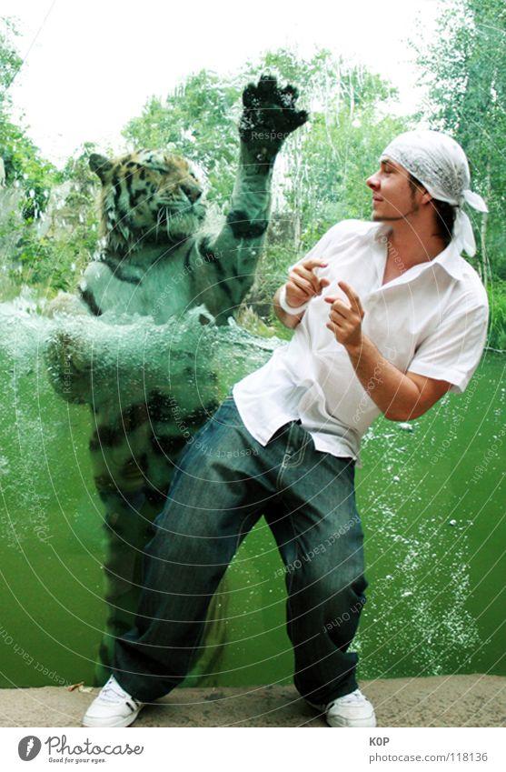 Tiger-Dance Katze Wasser Freude Bewegung Tanzen Zusammensein Zoo Tiger seltsam Überraschung begegnen Gefühle