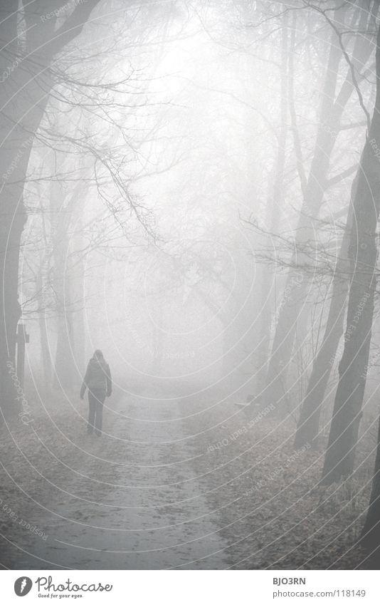 foggy woods #2 Frau Mensch Natur Baum Winter Einsamkeit Wald dunkel kalt Traurigkeit gehen Nebel nass Frost geheimnisvoll gefroren