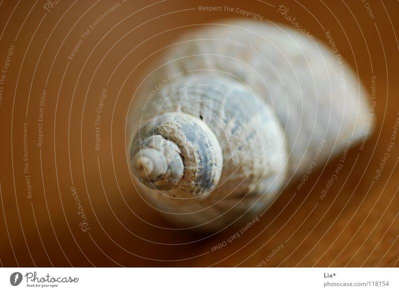 Fundstück Schneckenhaus Muschel Haus Spirale gedreht Meer See Meeresfrüchte Schraube Mangel Rarität Kalk Dekoration & Verzierung Schmuck rund finden Basteln