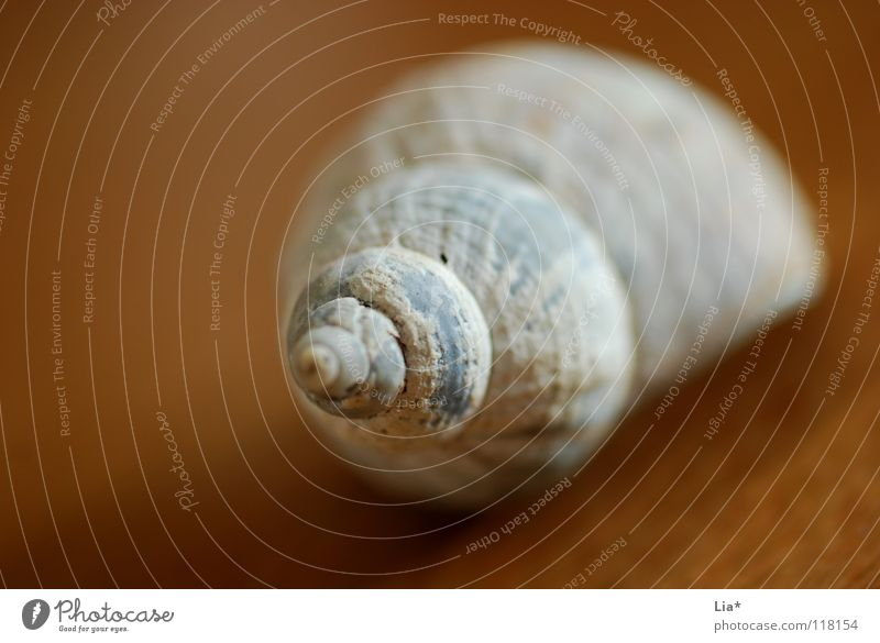 Fundstück schön Meer Haus Einsamkeit Tod See leer Fisch rund Dekoration & Verzierung Schmuck Muschel Schnecke Schalen & Schüsseln Spirale Schraube