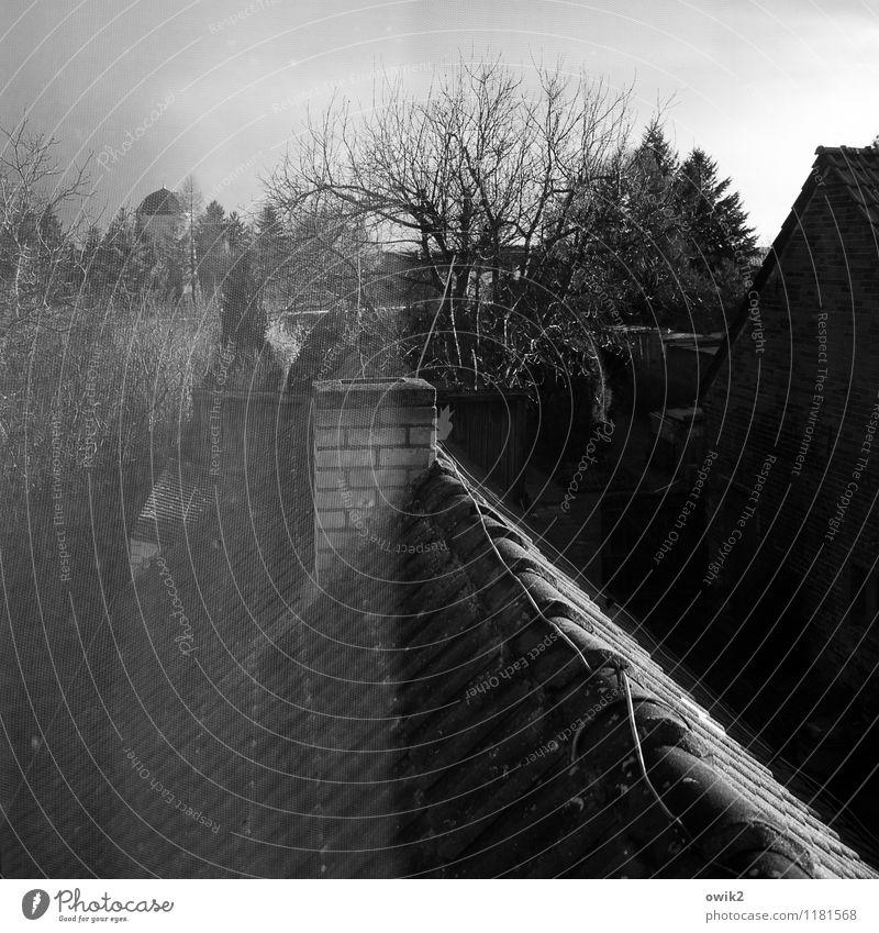 Gaze Natur alt Baum ruhig Haus Traurigkeit Garten nachdenklich Dach Schutz Kunststoff Stoff dünn Netz fest durchsichtig