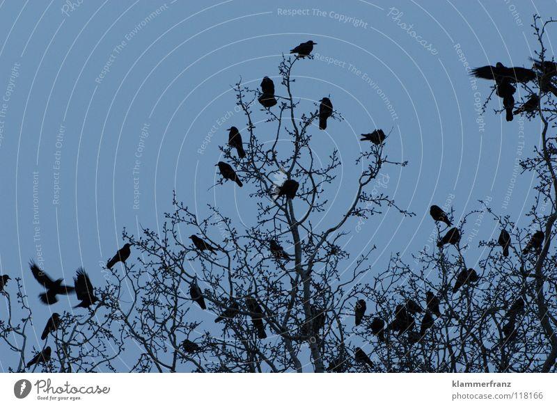 Vögelbaum Rabenvögel Baum Blatt Laubbaum Krähe Winter kalt gefroren erfrieren Park Gemälde Wolken grau schwarz weiß Am Rand Sträucher Vogel rund Parkbild Bild