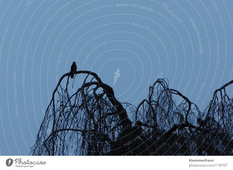Der Einsame Himmel weiß Baum Blatt Einsamkeit Winter Wolken schwarz kalt grau Traurigkeit Vogel Park Sträucher rund Trauer