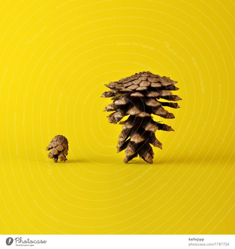 vater & sohn Umwelt Natur Pflanze alt dick dünn groß klein braun gelb Zapfen stehen Vatertag Erwachsene Kind Eltern Sohn Postkarte Farbfoto mehrfarbig