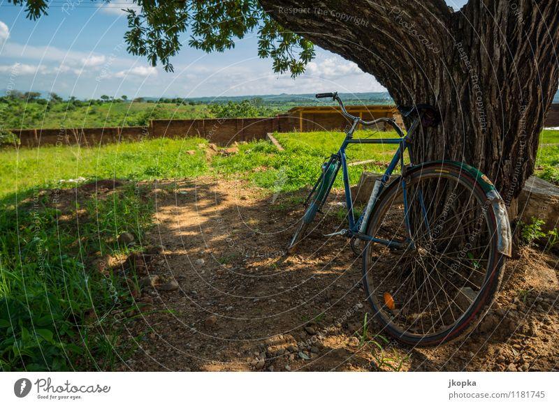 bicycle leans against a tree in malawi Ferne Fahrradtour Sommer Sonne Fahrradfahren Landschaft Wolken Schönes Wetter Verkehrsmittel Erholung frei Gesundheit