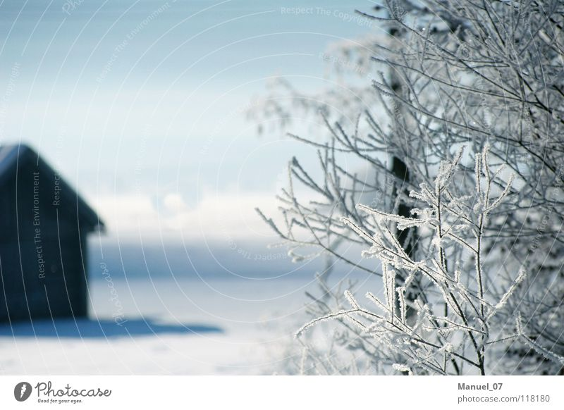KÄLTESCHLEIER Natur weiß Baum blau Pflanze Winter Ferien & Urlaub & Reisen ruhig Haus kalt Schnee Gefühle Berge u. Gebirge Landschaft Eis Stimmung