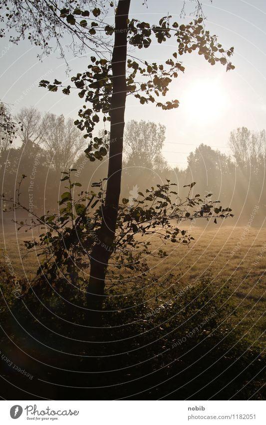 morgens um 7 Landschaft Sonnenaufgang Sonnenuntergang Frühling Nebel Baum Wildpflanze Feld Moor Sumpf Holz Wärme braun orange schwarz Gefühle Euphorie