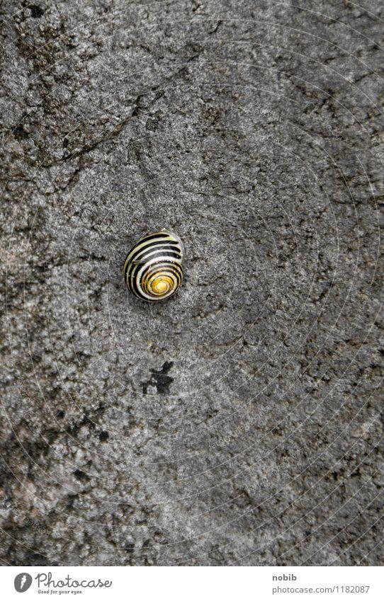 allein Natur ruhig Tier Strand schwarz gelb Wand Wiese Mauer grau Garten Stein Felsen Fassade orange Wildtier