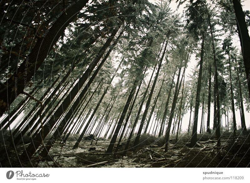 unter holz Holz Wald Baum Nadelwald Fichte Waldboden Unterholz Winterwald kalt Raureif Wäldchen Angst Panik fischaugenperspektive Perspektive geschlossen Schnee