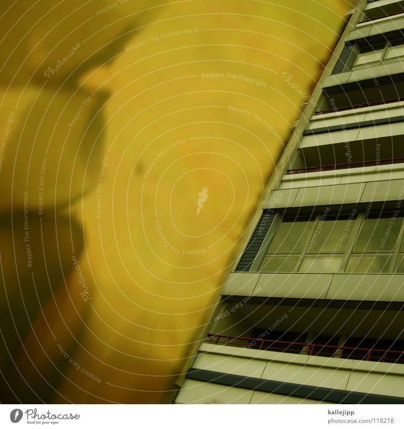 plattgold Stadt Pflanze Blume Haus Farbe Wand Fenster Architektur Lampe Beleuchtung Raum Glas rosa leer Ecke