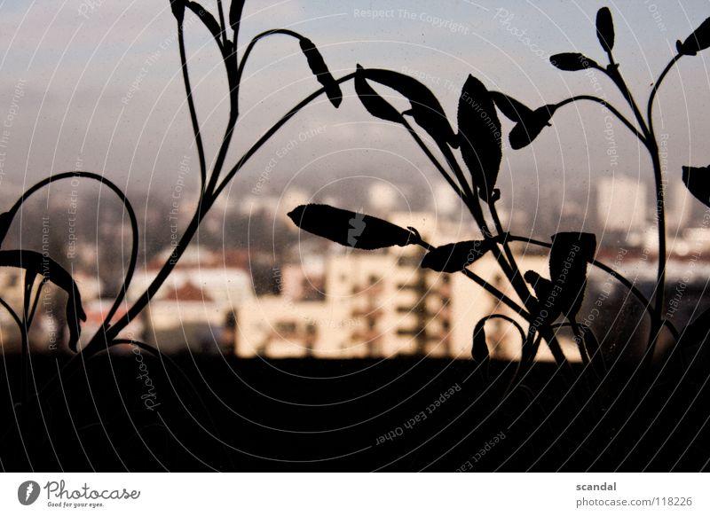 verwachsene stadt alt Blume Stadt Pflanze Haushalt getrocknet Graz 2008 Relief
