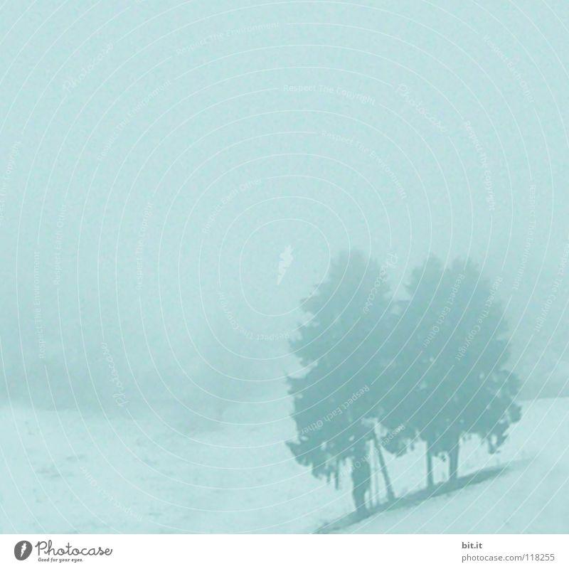 BLACK FOREST BLUES Tanne 2 Nebel grau Blues Winter Winterstimmung kalt Skigebiet Ferien & Urlaub & Reisen Winterurlaub Schwarzwald Baum Himmel eigenwillig