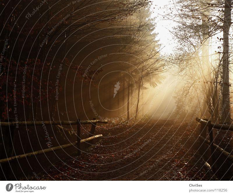 Brücke ins Licht Nebel Morgen Sonnenaufgang Winter Herbst schlechtes Wetter feucht nass kalt Strahlung Physik niedlich Blatt schwarz braun Baum Tunnel Romantik